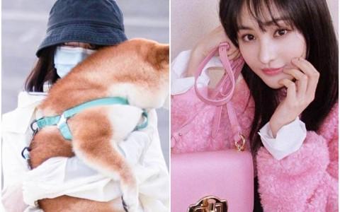担忧被爱犬咬伤 女星到宠物店要求店员「把牙磨平」